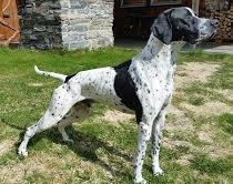 Ny_Elitehund_Kjesbuas_CO_Cato.jpeg